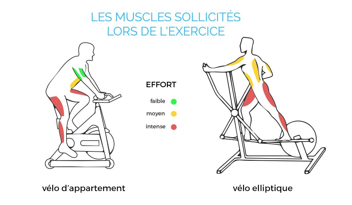 Muscles sollicités sur vélo elliptique