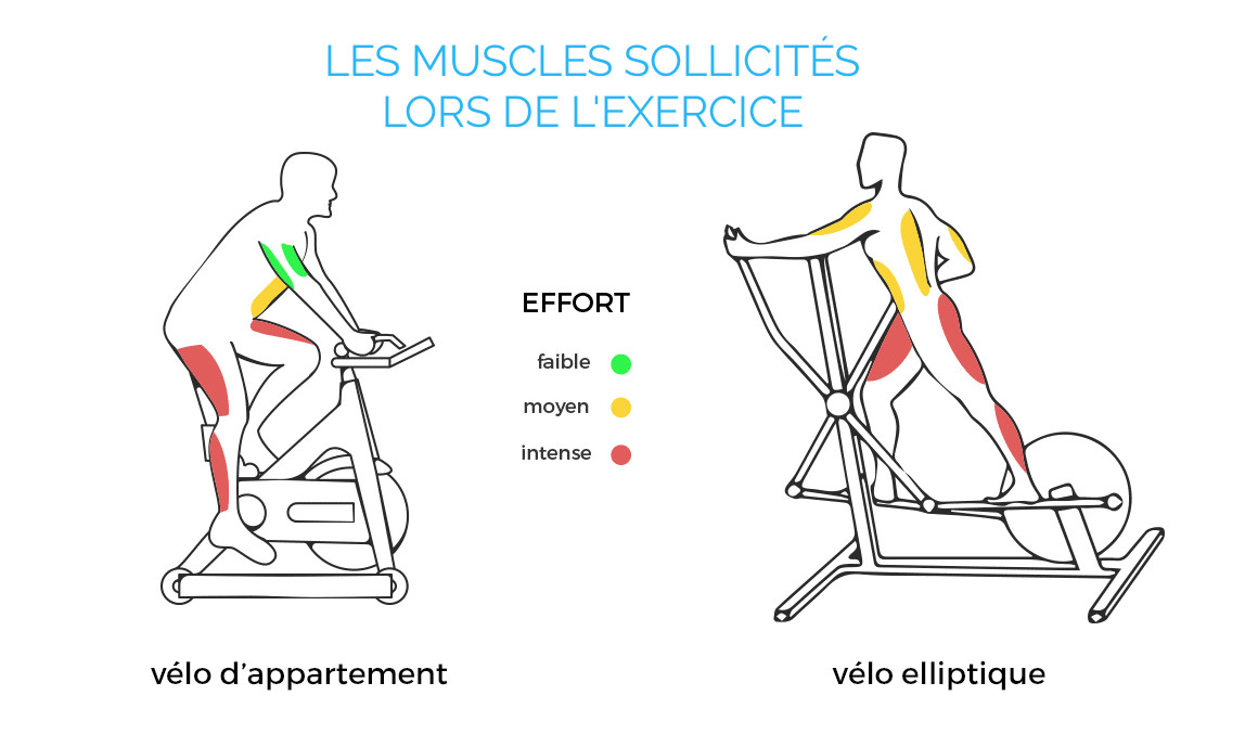v lo elliptique quels muscles sont sollicit s. Black Bedroom Furniture Sets. Home Design Ideas