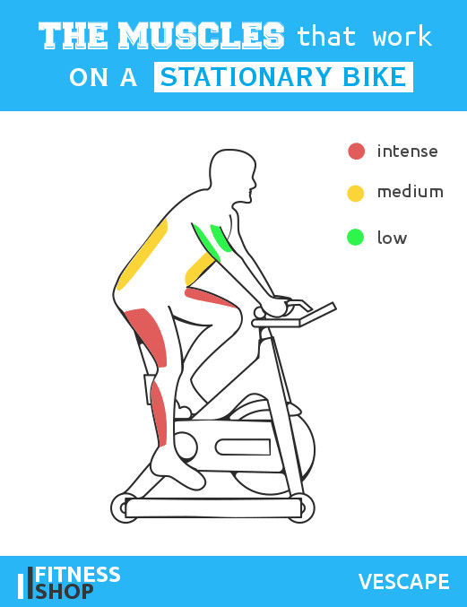 Muscles work on stationary bike