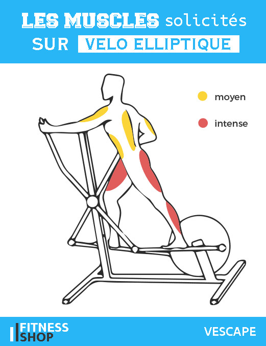 Velo elliptique muscles sollicites